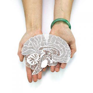 papercutting brain